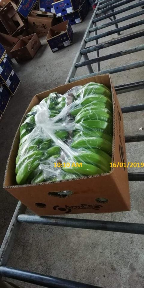 31279 - Philippine Fresh Cavendish Banana Exporters from Philippine